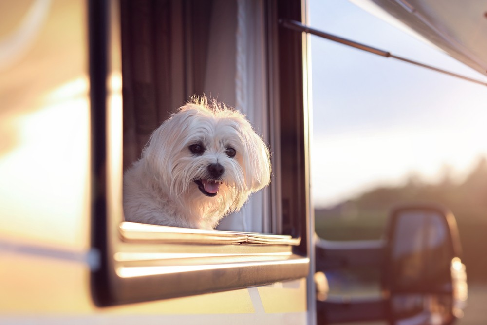 Tips for Lynnwood Residents Who Love to Travel With Their Pet