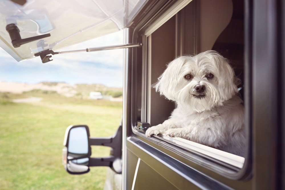 Take Your Pet with You When You Buy an RV Near Arlington!